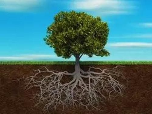 作物要丰收,养根才是关键