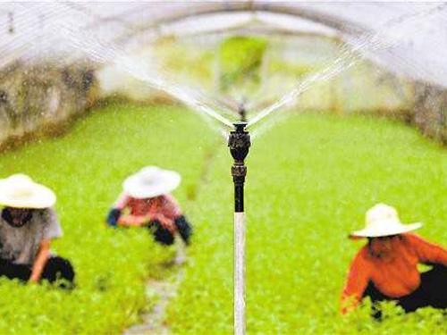 农田施肥过程中需要注意哪些